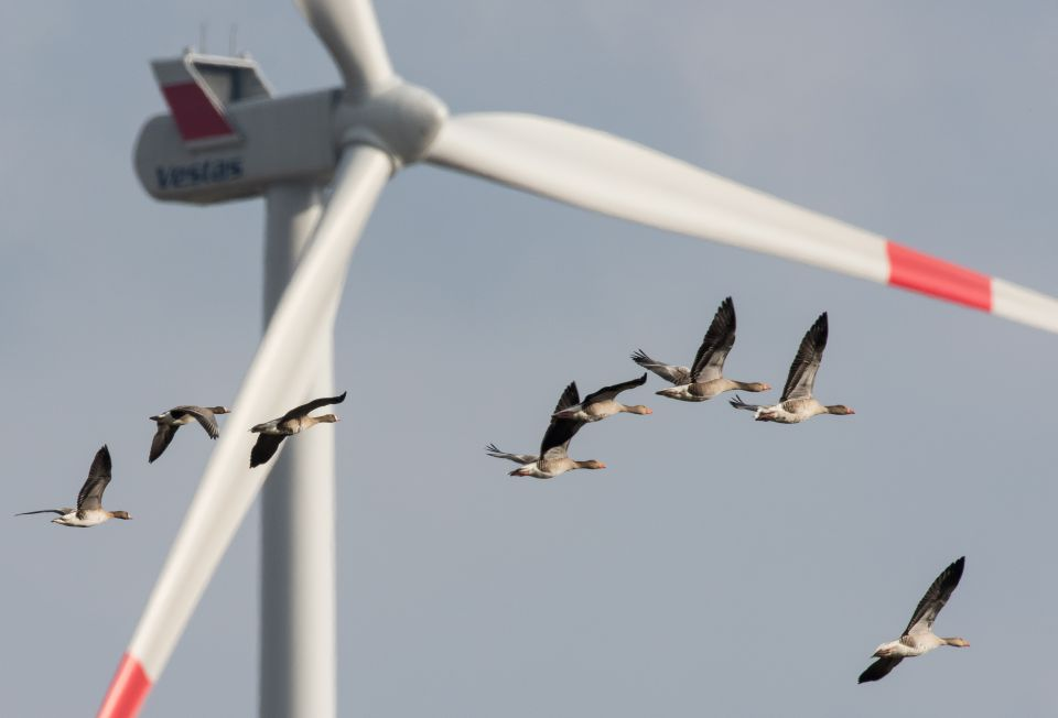 Vögel vor Windrad