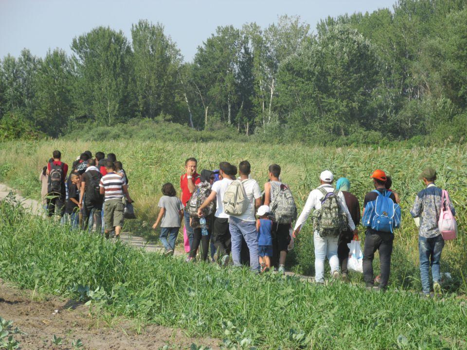 Illegale Einwanderer kurz vor dem Grenzübertritt nach Ungarn