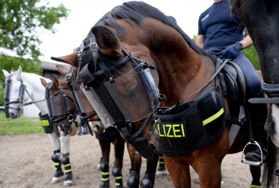 Polizeipferd (Symbolfoto)