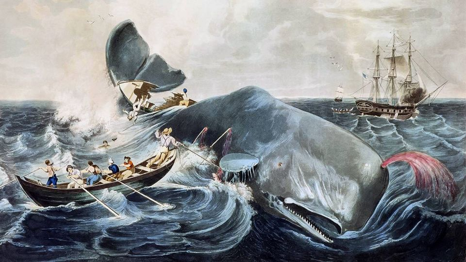 "Eine Vorlage für Herman Melvilles ""Moby-Dick"" (1851), ""Capturing a Sperm Whale"", Farbstich nach William Page von John Hill, 1835 Foto:     picture alliance/CPA Media"