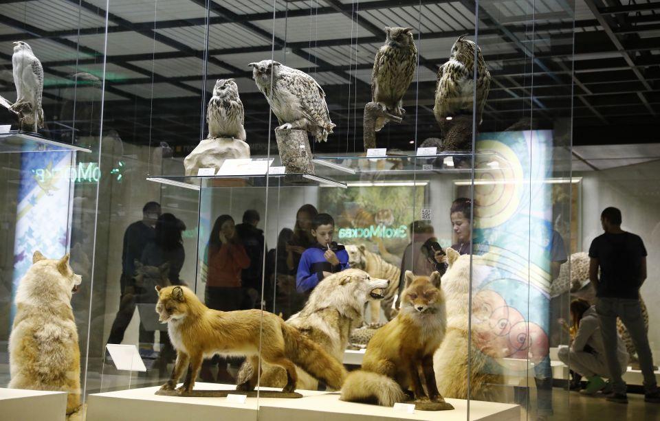 Darwin-Museum